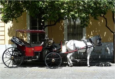 Coche de Caballo en Jerez